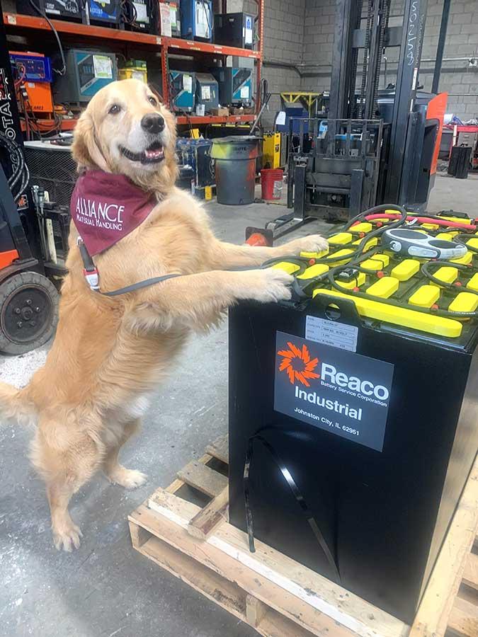 Levi Approved Forklift Battery